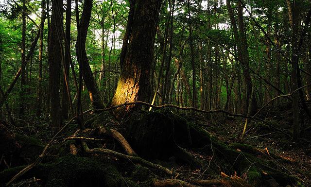 bosque de los suicidios- 1