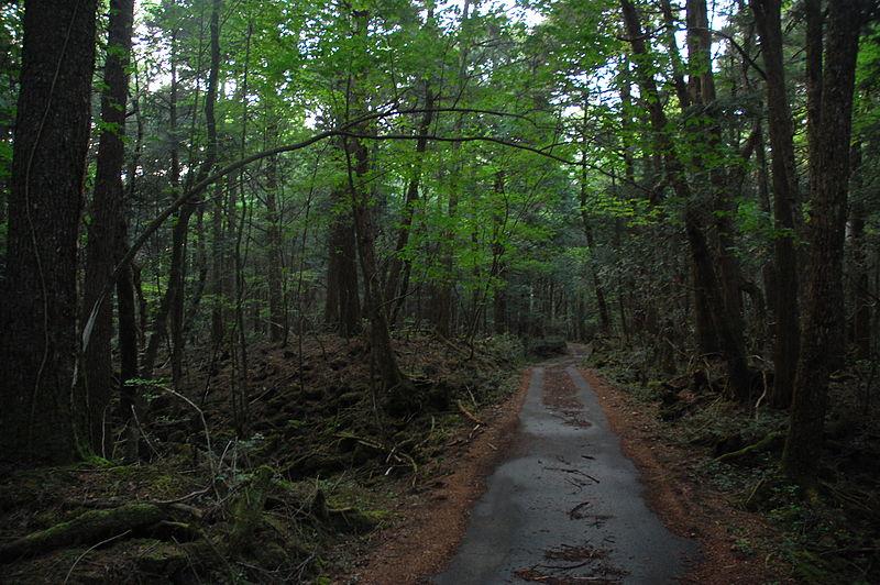 bosque de los suicidios- 2