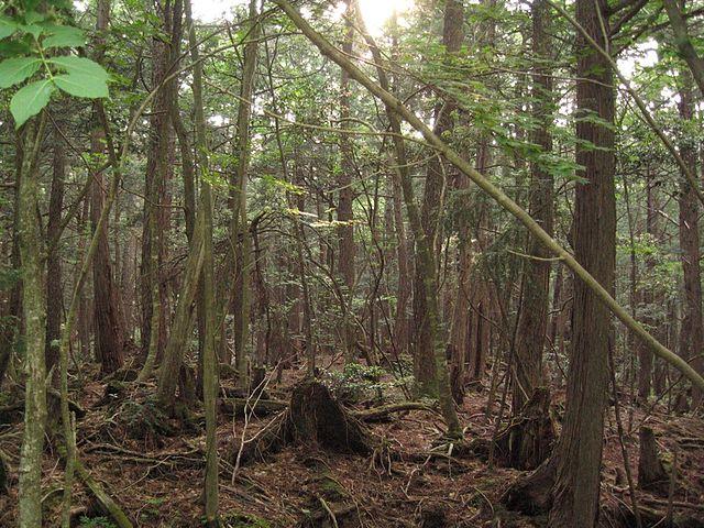 bosque de los suicidios- 3